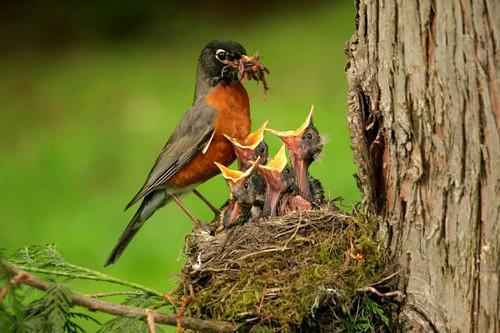3810441677 2eddeb9db6 Beautiful Birds   The Splash of Colors!!!