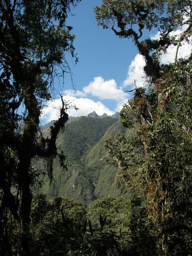 view from the jungle on the descent to camp