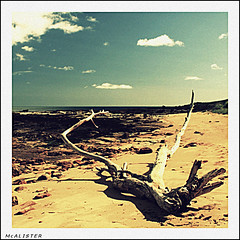 Kingsbarns driftwood (McAlister) Tags: sea beach vintage square geotagged scotland fife retro driftwood kingsbarns