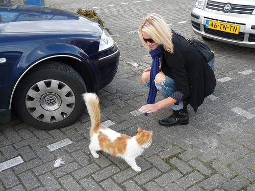 holland blog kitty2