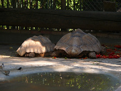 turtles002 (Zachi Evenor) Tags: animal animals zoo israel turtles        rishonlezion     zachievenor chaykef haikef chaikef