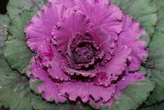 leafy (smenzel2) Tags: hipbotunsquare