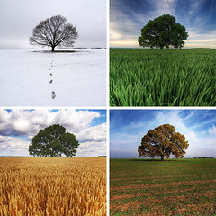 four seasons (Paul Petruck) Tags: autumn winter summer tree nature landscape spring seasons series compilation