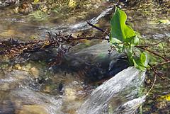 Crystal Clear (sakkie janse van rensburg Sakkie van Rensburg) Tags: winter mountain stream du toits kloof