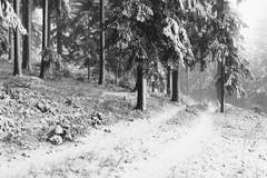 A grey winter day (desomnis) Tags: forest wood woodland woods böhmerwald bohemianforest nature naturephotography landscape landscapephotography landschaft landscapes austria upperaustria oberösterreich österreich trees winter snow cold frost monochrome blackandwhite blackwhite bw canon6d sigma35mm sigma35mmf14dghsmart desomnis