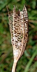 goblet flower (Cypella coelestis) LIRIO CELESTE ............. Original = (1679 x 3266) (turdusprosopis) Tags: plantasbrasileiras iridaceae florabrasileira gobletflower brazilianflowers floraargentina cypella iridceas cypellacoelestis cypellaplumbea floramisionera plantasargentinas plantasdeargentina floradeldeltadelparan floraautctonauruguaya floraautctonadeuruguay floraautctonadeluruguay plantasautctonasargentinas plantasautctonasdelaargentina floraautctonaargentina floraautctonadeargentina plantasnativasargentinas plantasnativasdeargentina plantasnativasdelaargentina plantasparaguayas brazilianplants floradeluruguay plantasuruguayas florauruguaya plantasdeluruguay floradeldelta floradelaargentina floradeargentina plantasautctonasdeluruguay floranativauruguaya floranativadeuruguay plantasautctonasdeargentina floraautctonadelaargentina floradelparaguay floradeparaguay floraparaguaya plantasdelparaguay plantasdeparaguay plantasautctonasdelparaguay floranativabrasileira floranativadobrasil floradobrasil floradoriograndedosul plantascorrentinas plantasnativasdobrasil argentineflowers indigenousflowersofargentine argentineindigenousplants plantasnativasdeentreros floracorrentina floradecorrientes floraentrerriana floradeentreros plantasdecorrientes plantasdeentreros indigenousplantsofargentine argentineindigenousflowers indigenousfloraofargentine floraofargentine argentineflora floweringplantsofargentine paraguayanflowers cypellas lirioceleste phalocalliscoelestis cypellaplumbeaplatensis phalocaluscoelestus maricacoelestis phalocallisplumbea tigridiacoelestis