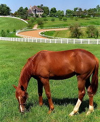 Lexington Kentucky - Donamire Farm \