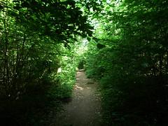 le chemin vers nulle part (nicouze) Tags: leica trees france green landscape vert arbres hd paysage foret chemin verdure nicouze clux3 gmofreeworld lamondesansogm