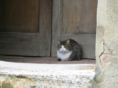 Cat in San Giovanni d'Asso (ZanyShani) Tags: trip italy june tuscany toscana 2009 cretesenesi sangiovannidasso cretesenese provinceofsiena