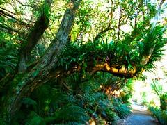 IMG_5791 (billdog) Tags: australia tasmania tassie downunder
