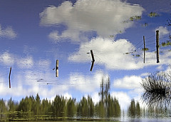 ~~Cloud Escape~~ (mikenpo) Tags: blue trees fab lake reflection clouds canon fence mikenpo oracoob