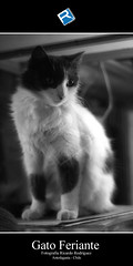 Gato Feriante (Ricardo Rodriguez Photography) Tags: chile blancoynegro gato antofagasta supersonico segundaregión ricardorodríguez