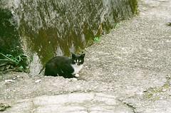 51920003 (.COM+) Tags: street cat taiwan 400 taipei konica 135   2009 fm2  centuria   houtong