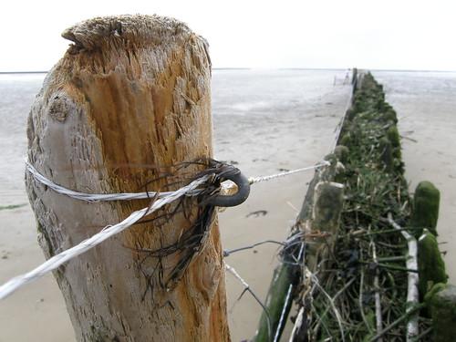 Fail :-) Weidezaunlitze unter harten Bedingungen