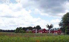 Tobacco Huts (TanyaVF) Tags: trees red abandoned grass clouds colours huts tobacco norfolkcounty tobaccohuts sonya350