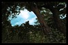 3D Landscape (Ashan de Silva) Tags: blue trees sky brown tree green nature beauty grass yellow clouds landscape scenery vine explore trunk srilanka 1855mm dslr canondslr ashan canoneos500d kalaniya canon1855mmis ashandesilva canonrebelt1i