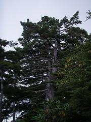 P9050165
