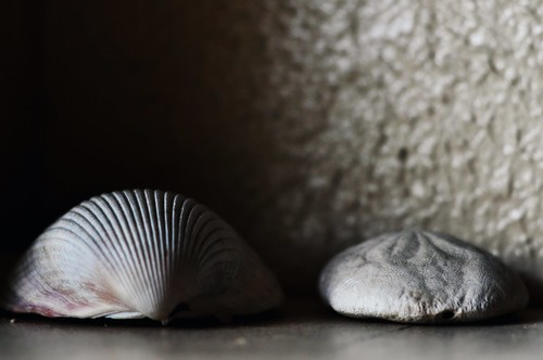Shells & Shadows:  August 19, 2009