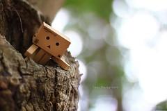 (sⓘndy°) Tags: sanfrancisco toy toys box figure figurine sindy kaiyodo yotsuba danbo revoltech danboard 紙箱人 阿楞 updatecollection amazoncomjp