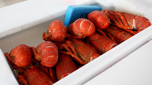 Crayfish at Nins Bin, Kaikoura