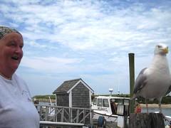 Killer Seagull