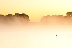 Lost in the fog (96dpi) Tags: autumn bird fog sunrise nebel herbst 85mm vivitar sonnenaufgang vogel samyang