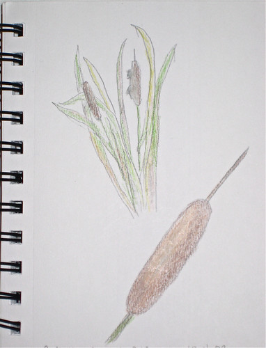 Cattail Nature Journal (By Me)