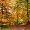 October colours (Ingrid0804) Tags: wood autumn trees fall forest denmark path vaerloese 100commentgroup vosplusbellesphotos virtualjourney saariysqualitypictures