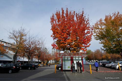 Granville Island in Autumn by you.
