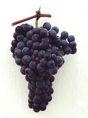 FPM220 Uva, variedade Seibel 10096 (Fernando Picarelli Martins) Tags: frutas uva vinho winegrape variedadehíbrida variedadeparavinificação seibel10096 hybridvariety