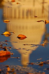 Fall (erin m) Tags: autumn reflection fall colors leaves puddle washingtondc uscapitol capitol nationalmall dcist