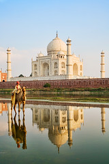 India 323 (David Davis Photoproductions) Tags: travel india reflection tourism asian temple asia indian famous religion tomb tajmahal agra landmark icon mosque tourist historic unesco worldheritagesite camel mausoleum sacred destination marble domes minarets attraction yamunariver uttarpradesh domed thirdworldcountry