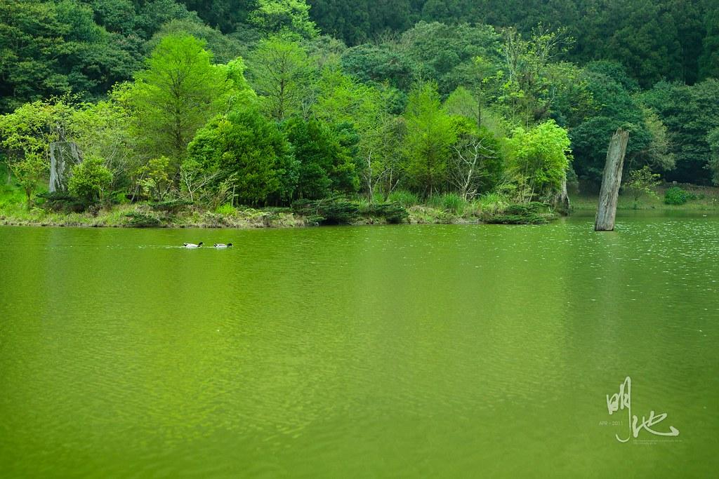 明池.綠意