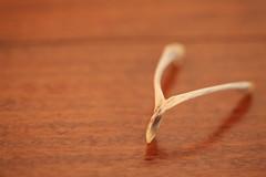 make a wish! ~ day 25~ (Leah / euroswiss2003) Tags: bone wishing wishbone makeawish