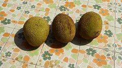 Jackfruit (Marshall_DC) Tags: mawlamyine myanmar jackfruit good fruit