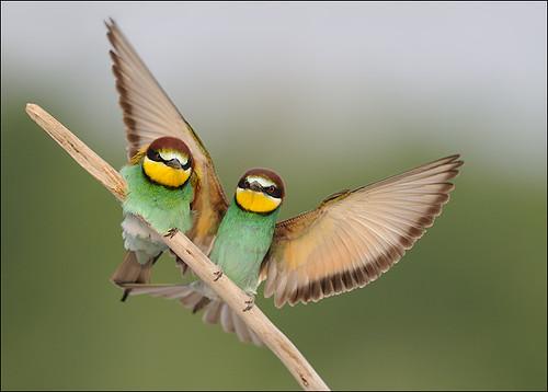Under my wing