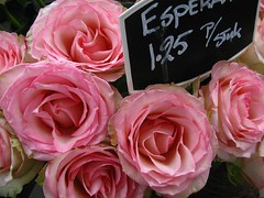Flowermarket  pink roses (tvordj) Tags: pink flowers roses netherlands amsterdam grandmother patterns superhero thumbsup bigmomma gamewinner challengeyouwinner cywinner friendlychallenges fotocompetitionbronze agcgwinner herowinner showbizwinner
