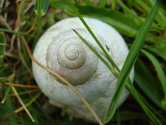 (Alexandre COBIGO) Tags: white france nature grass nick pick escargot