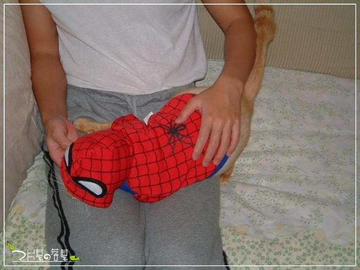 Spider-Cat_05.jpg