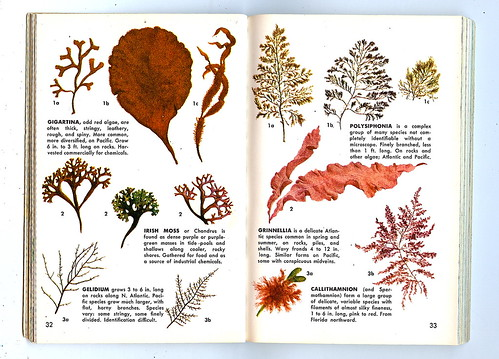 Sea Weeds From Seashore Golden Guide To Nature