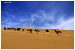 (A.Alwosaibie) Tags: light lens photo nikon shot desert spot camel vr sponsor noahsark  ksa d60  naturesfinest   alhasa      nikon1855mm    platinumphoto   colorphotoaward   aalwosaibie artistoftheyearlevel3