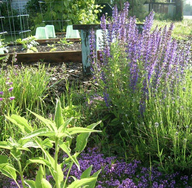 June Herb Garden