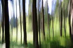 Forest Jump (Toni_V) Tags: abstract motion blur nature topv111 forest schweiz switzerland europe suisse hiking panning 2009 randonnée d300 sigma1020mm hergiswil nidwalden photographyrocks treesinmotion toniv alpgschwänd intentionalcameramovement 090613