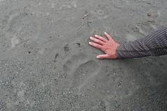 Brown Bear track on Endicott River