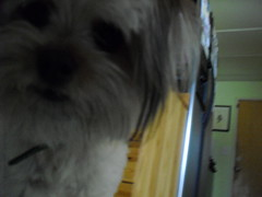 Hello? (Lauwen, again, :o!) Tags: dog kota cewbacca