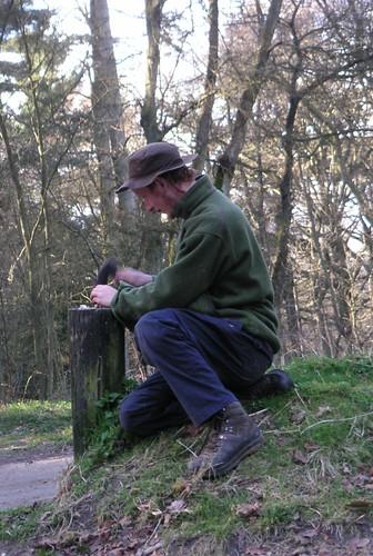 small-ginj-blackwood-carve
