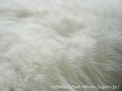 ミア(猫)の写真5