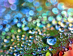 To See The World . . . (Uncle Phooey) Tags: morning blue red orange macro green water rose yellow closeup dewdrops droplets leaf globe colorful bokeh missouri dew springfield ozarks sparkling springfieldmissouri theworld springfieldmo circlesofconfusion hbw unclephooey