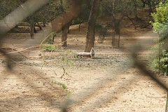 the deer park is not open today (romana klee) Tags: park india hot fountain fence closed empty delhi south deer dirt fallen dust deerpark hauzkhas knockedover