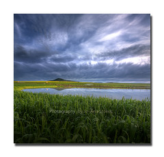 Cry me a River! (Jo-Ann Stokes) Tags: winter barley yellow dam farm wheat hill tablemountain durbanville canolafields platinumphoto vertorama